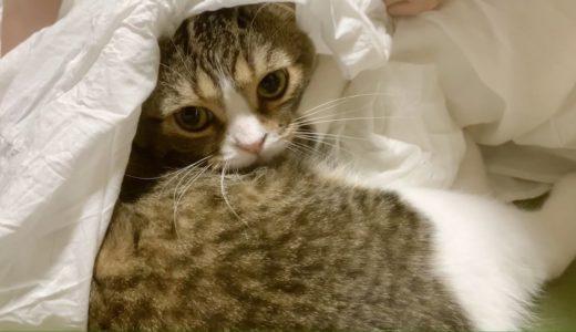 ママが大好きすぎてスカートに侵入しちゃった猫