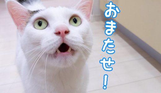 お昼になるとママのところに来てお喋りする猫