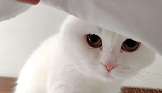 起きてこない飼い主が心配で布団の中を覗き込む猫!