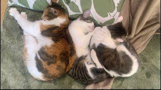 猫と住職とお寺。