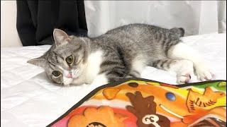 運動がイヤで、ついにサボるという事を覚えた猫がこちらです…