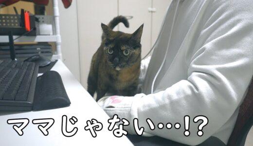 ママのにゃんガルーパーカーを着たらサビ猫モモちゃんは入るのか?