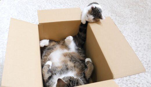 子ねこを狂わせるしっぽを持つねこ。-Maru's tail drives a kitten crazy!-
