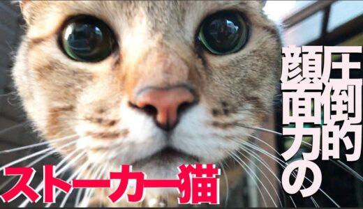 野良の美女猫にストーカー猫現る