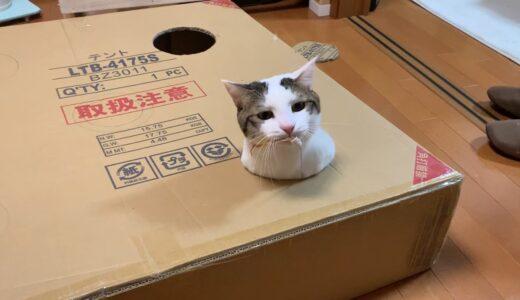 何回もヒョッコリ、ヒョッコリと顔を出す猫